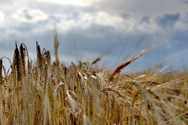 Sytuacja na kontach rolników lepsza niż na polach.